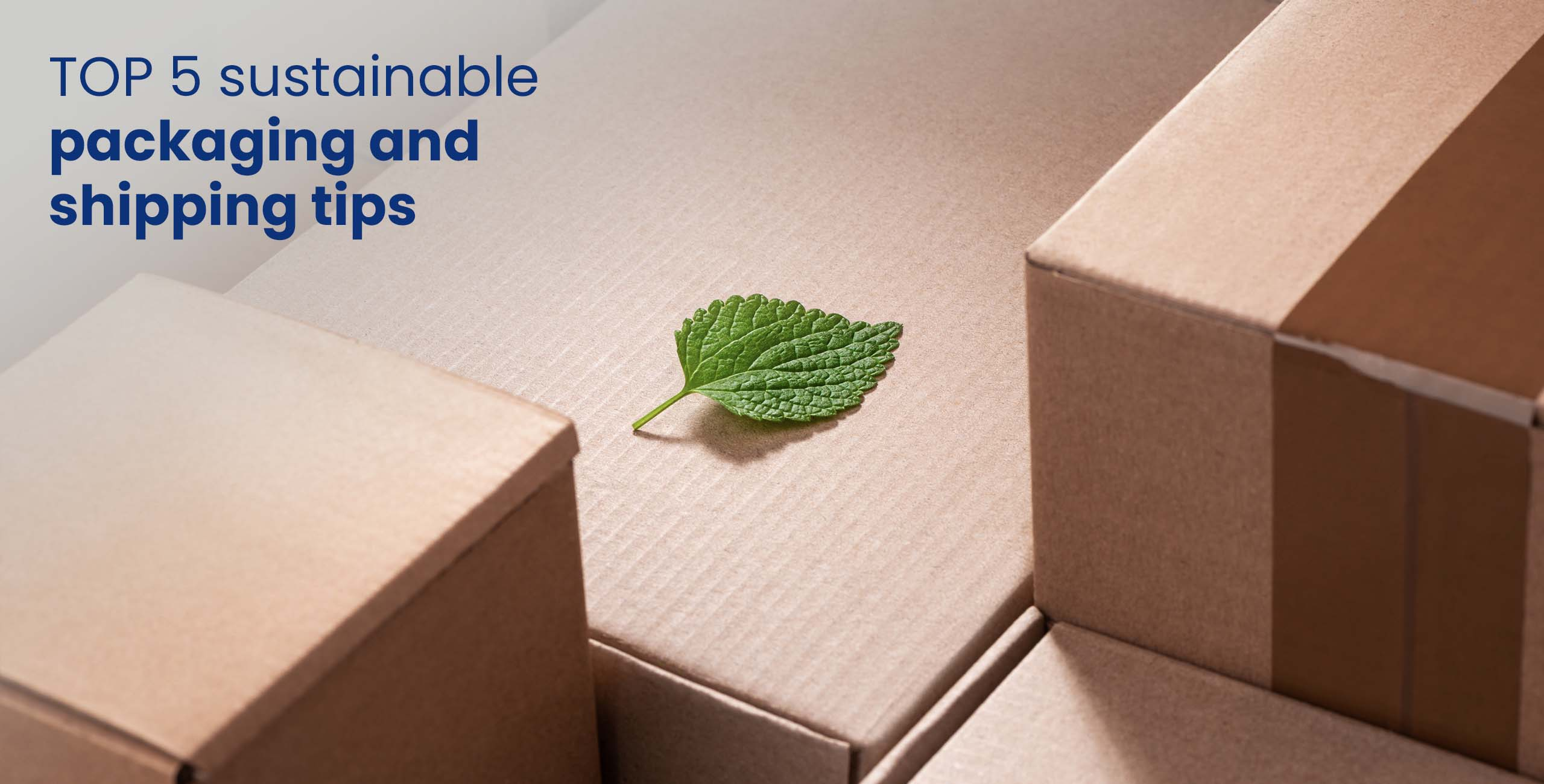 sustainable package with green leaf on a box
